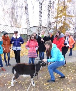 коза 3