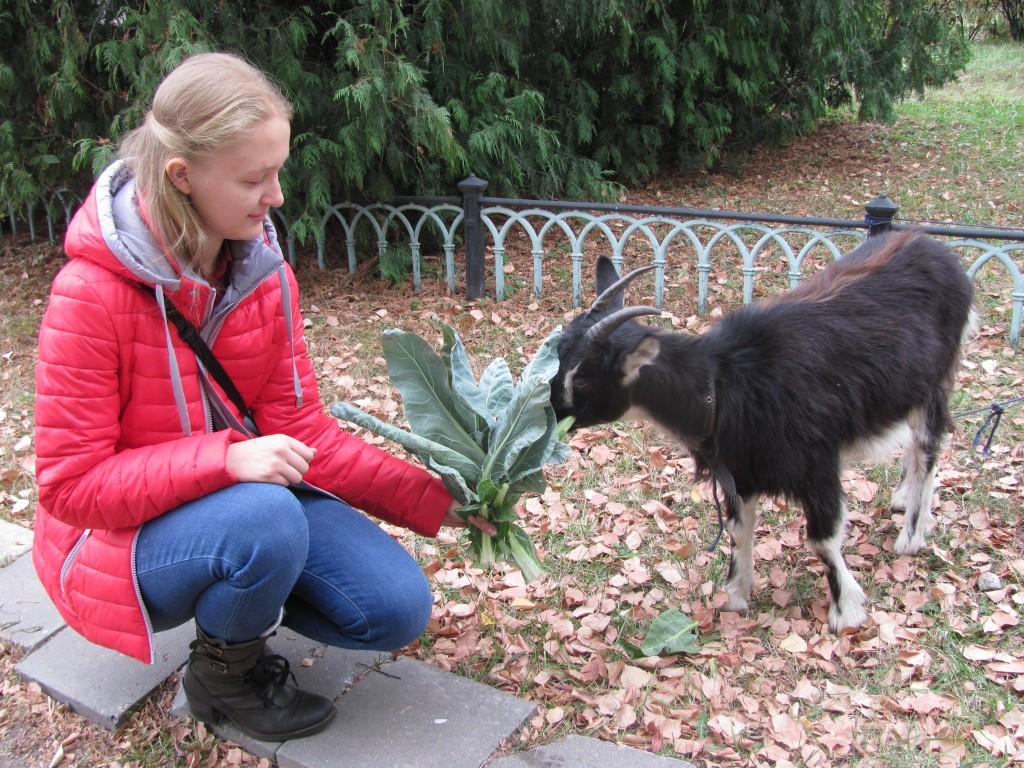 фото коза