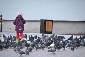 девочка и голуби 2