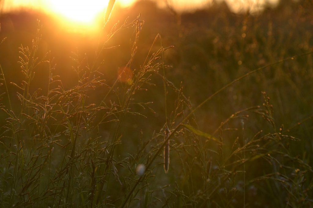 природа для цыган