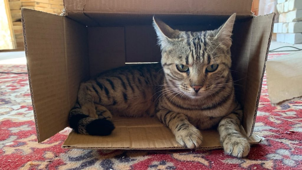 Кобзева кошка в коробке